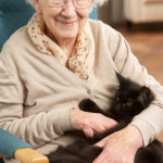 A Goldfish, Cat, or Dog: Are Any of These Pets Good for Senior Care in East Haven, CT?